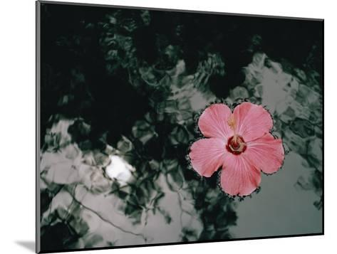 Hibiscus Flowers-Dick Durrance-Mounted Photographic Print