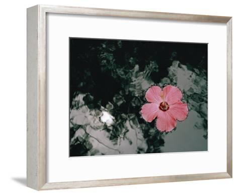 Hibiscus Flowers-Dick Durrance-Framed Art Print
