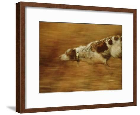 Hunting Dog Running-Joel Sartore-Framed Art Print