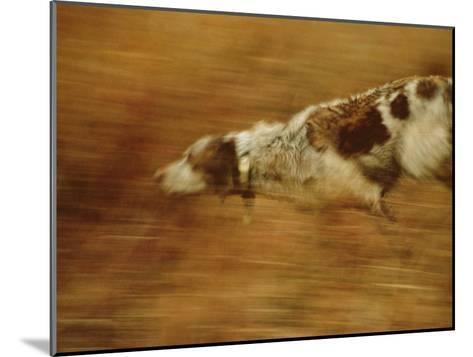 Hunting Dog Running-Joel Sartore-Mounted Photographic Print