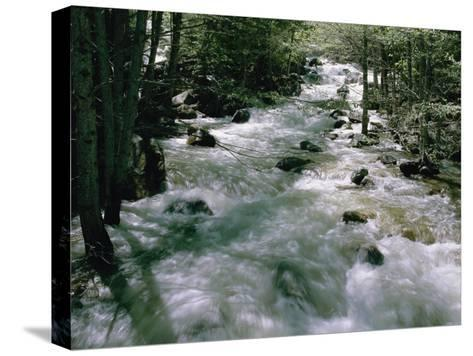 Water Cascading Down a Forest Creek-Marc Moritsch-Stretched Canvas Print