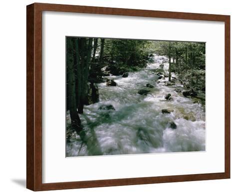 Water Cascading Down a Forest Creek-Marc Moritsch-Framed Art Print