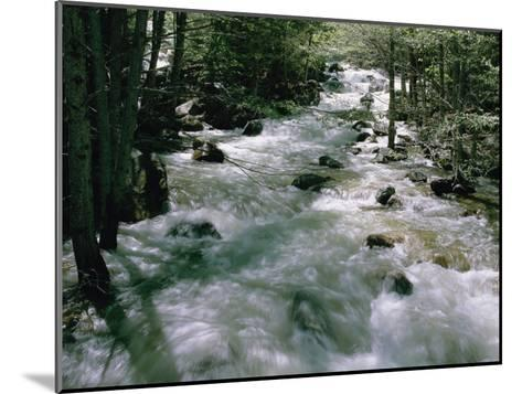 Water Cascading Down a Forest Creek-Marc Moritsch-Mounted Photographic Print