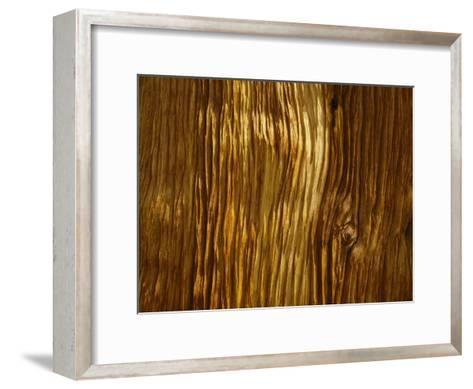 Close View of a Weathered Foxtail Pine Bark-Marc Moritsch-Framed Art Print