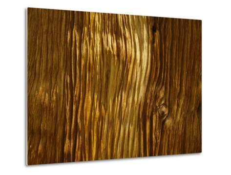 Close View of a Weathered Foxtail Pine Bark-Marc Moritsch-Metal Print