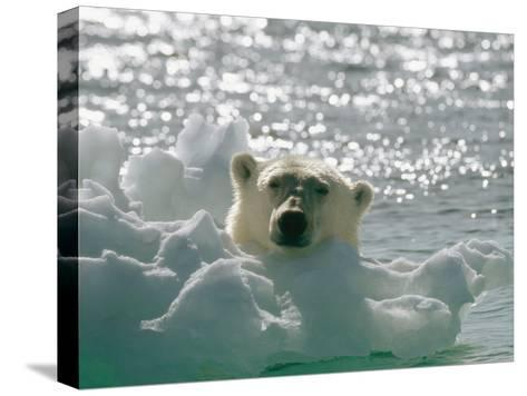 A Polar Bear in the Water Peers up over a Chunk of Ice-Norbert Rosing-Stretched Canvas Print