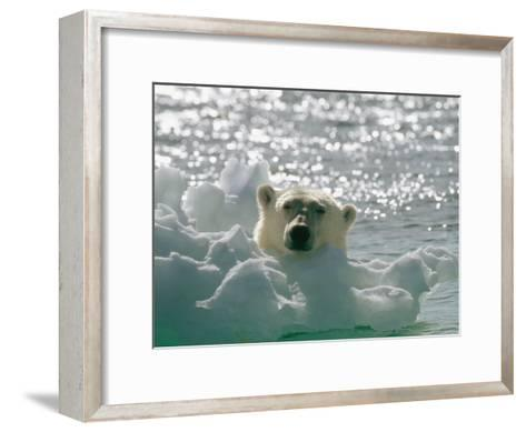 A Polar Bear in the Water Peers up over a Chunk of Ice-Norbert Rosing-Framed Art Print