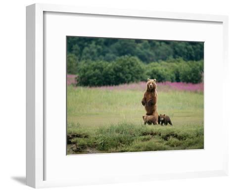 An Alaskan Brown Bear Guards Her Cubs-Roy Toft-Framed Art Print