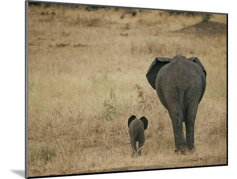 A Juvenile African Elephant and its Parent Walk off into the Savanna-Roy Toft-Mounted Photographic Print