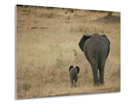 A Juvenile African Elephant and its Parent Walk off into the Savanna-Roy Toft-Metal Print