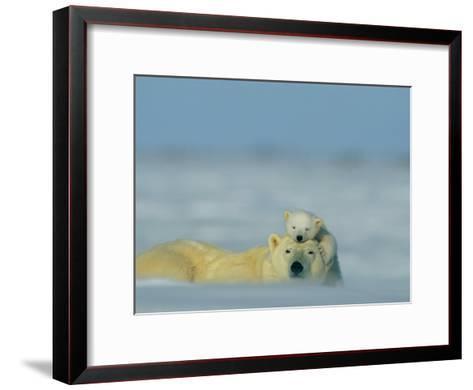 A Polar Bear Cub (Ursus Maritimus) Finds a Peaceful Sleeping Spot on its Mothers Head-Norbert Rosing-Framed Art Print