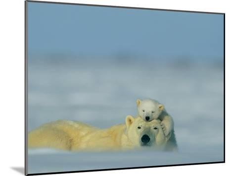 A Polar Bear Cub (Ursus Maritimus) Finds a Peaceful Sleeping Spot on its Mothers Head-Norbert Rosing-Mounted Photographic Print
