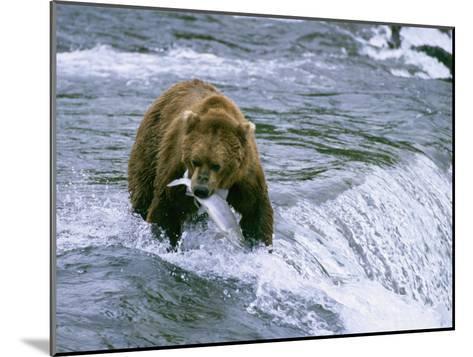 Grizzly Bear (Ursus Arctos) Fishing at Brook Falls, Katmai National Park, Alaska-Rich Reid-Mounted Photographic Print