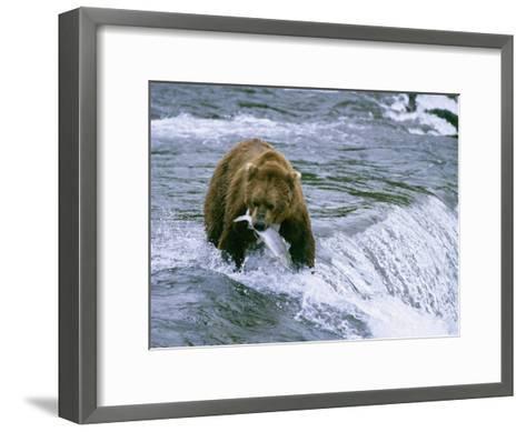 Grizzly Bear (Ursus Arctos) Fishing at Brook Falls, Katmai National Park, Alaska-Rich Reid-Framed Art Print