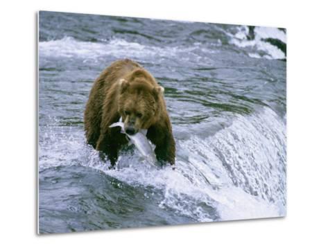 Grizzly Bear (Ursus Arctos) Fishing at Brook Falls, Katmai National Park, Alaska-Rich Reid-Metal Print