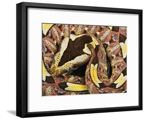Rhinoceros Viper-George Grall-Framed Art Print