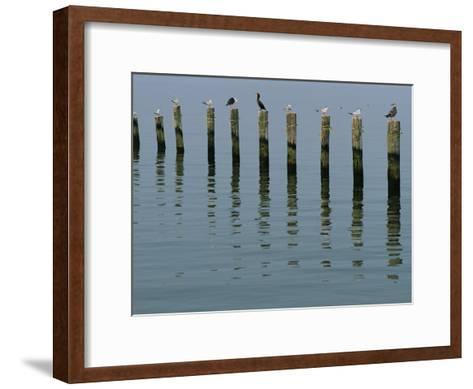 Gulls Perched on Pilings-Robert Madden-Framed Art Print