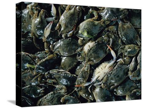 Crabs Caught in the Grasses off Smith Island-Robert Madden-Stretched Canvas Print