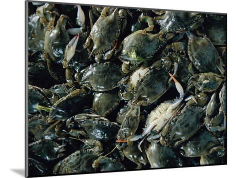 Crabs Caught in the Grasses off Smith Island-Robert Madden-Mounted Photographic Print