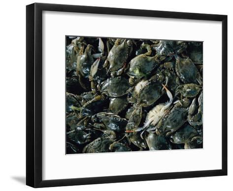 Crabs Caught in the Grasses off Smith Island-Robert Madden-Framed Art Print