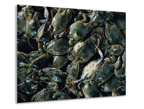 Crabs Caught in the Grasses off Smith Island-Robert Madden-Metal Print