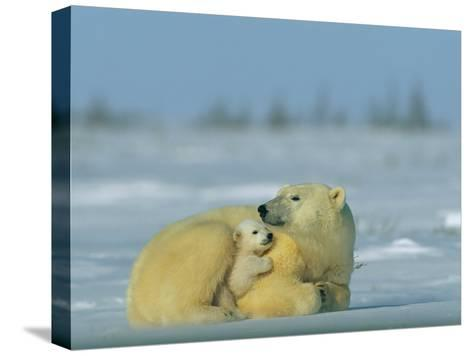 Mother and Cub Polar Bear Nestle Together for Warmth in the Arctic Landscape-Norbert Rosing-Stretched Canvas Print