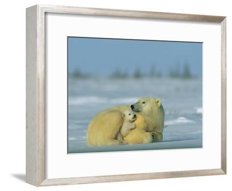 Mother and Cub Polar Bear Nestle Together for Warmth in the Arctic Landscape-Norbert Rosing-Framed Art Print