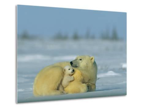 Mother and Cub Polar Bear Nestle Together for Warmth in the Arctic Landscape-Norbert Rosing-Metal Print