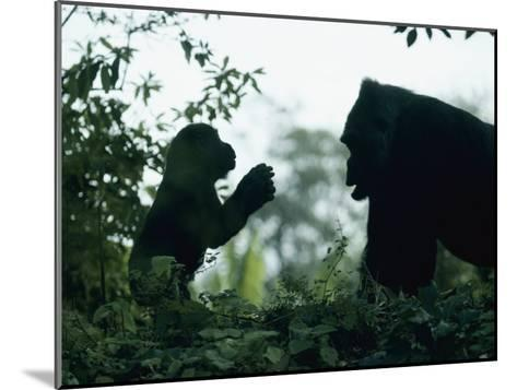 A Female Western Lowland Gorilla Appears to Be Teaching Her Youngster-Jason Edwards-Mounted Photographic Print