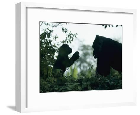 A Female Western Lowland Gorilla Appears to Be Teaching Her Youngster-Jason Edwards-Framed Art Print