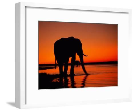 African Elephant Silhouetted at Twilight-Beverly Joubert-Framed Art Print