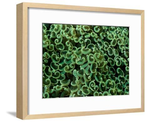 A Close View of Anchor Coral-Wolcott Henry-Framed Art Print