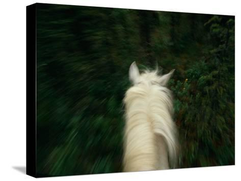Panned View of a Saddle Horse from Above-Raymond Gehman-Stretched Canvas Print
