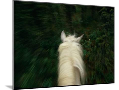 Panned View of a Saddle Horse from Above-Raymond Gehman-Mounted Photographic Print