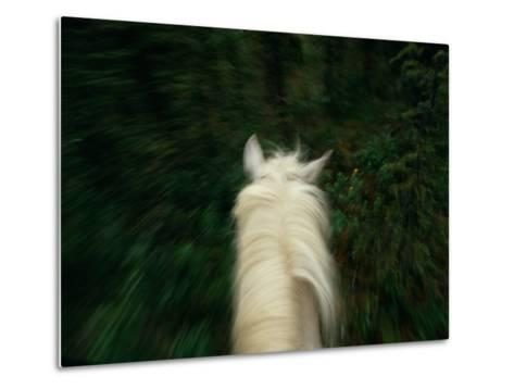 Panned View of a Saddle Horse from Above-Raymond Gehman-Metal Print