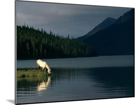 A Horse Drinks from a Lake-Raymond Gehman-Mounted Photographic Print