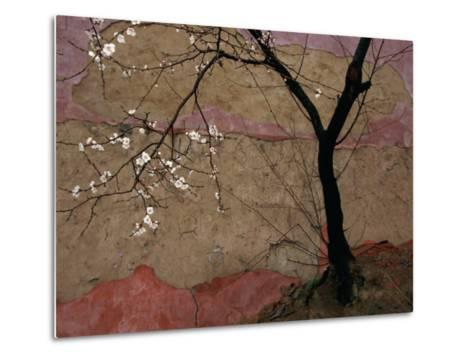 Plum Tree against a Colorful Temple Wall-Raymond Gehman-Metal Print