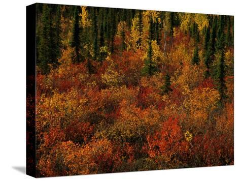 Autumn Foliage Along the Mckenzie River-Raymond Gehman-Stretched Canvas Print