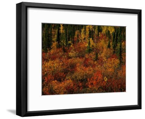 Autumn Foliage Along the Mckenzie River-Raymond Gehman-Framed Art Print