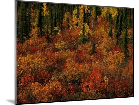Autumn Foliage Along the Mckenzie River-Raymond Gehman-Mounted Photographic Print