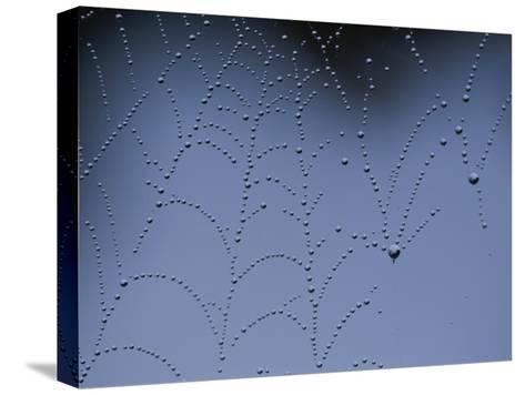 Detail of Spider Web Bejeweled with Crystal Drops of Dew-Annie Griffiths Belt-Stretched Canvas Print