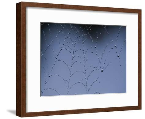 Detail of Spider Web Bejeweled with Crystal Drops of Dew-Annie Griffiths Belt-Framed Art Print