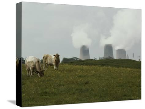 Cows Graze Near a Nuclear Power Plant-Karen Kasmauski-Stretched Canvas Print