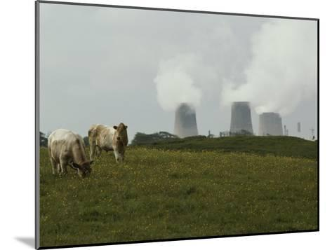 Cows Graze Near a Nuclear Power Plant-Karen Kasmauski-Mounted Photographic Print