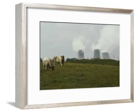 Cows Graze Near a Nuclear Power Plant-Karen Kasmauski-Framed Art Print