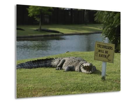 An American Alligator on a Lawn Next to a Humorous Warning Sign-Raymond Gehman-Metal Print