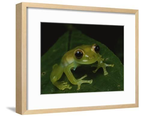 A Close View of a Cute Little Green Frog-George Grall-Framed Art Print