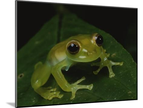A Close View of a Cute Little Green Frog-George Grall-Mounted Photographic Print