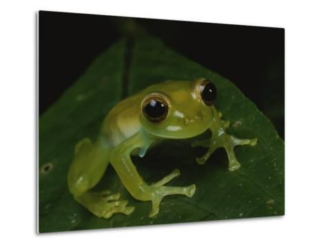 A Close View of a Cute Little Green Frog-George Grall-Metal Print
