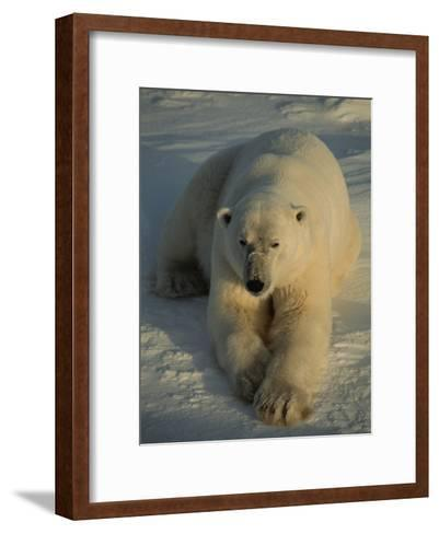 A Close View of a Polar Bear Resting on Ice-Tom Murphy-Framed Art Print